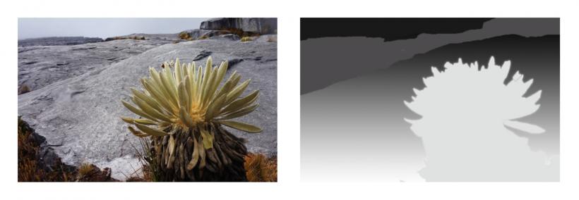 Impara a creare video, GIF animate e Cinemagraph con Adobe Photoshop